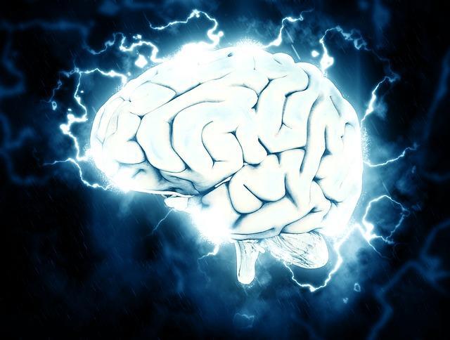 brain circulation