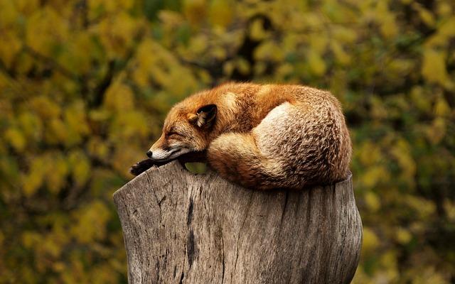 sleep subluxation
